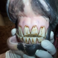 Worn Incisors